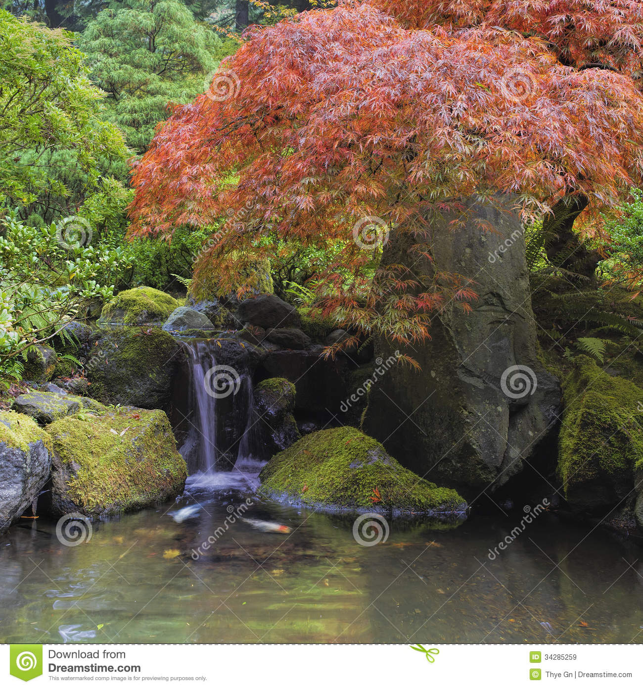 Red Maple Tree Over Waterfall Pond Stock Image Image