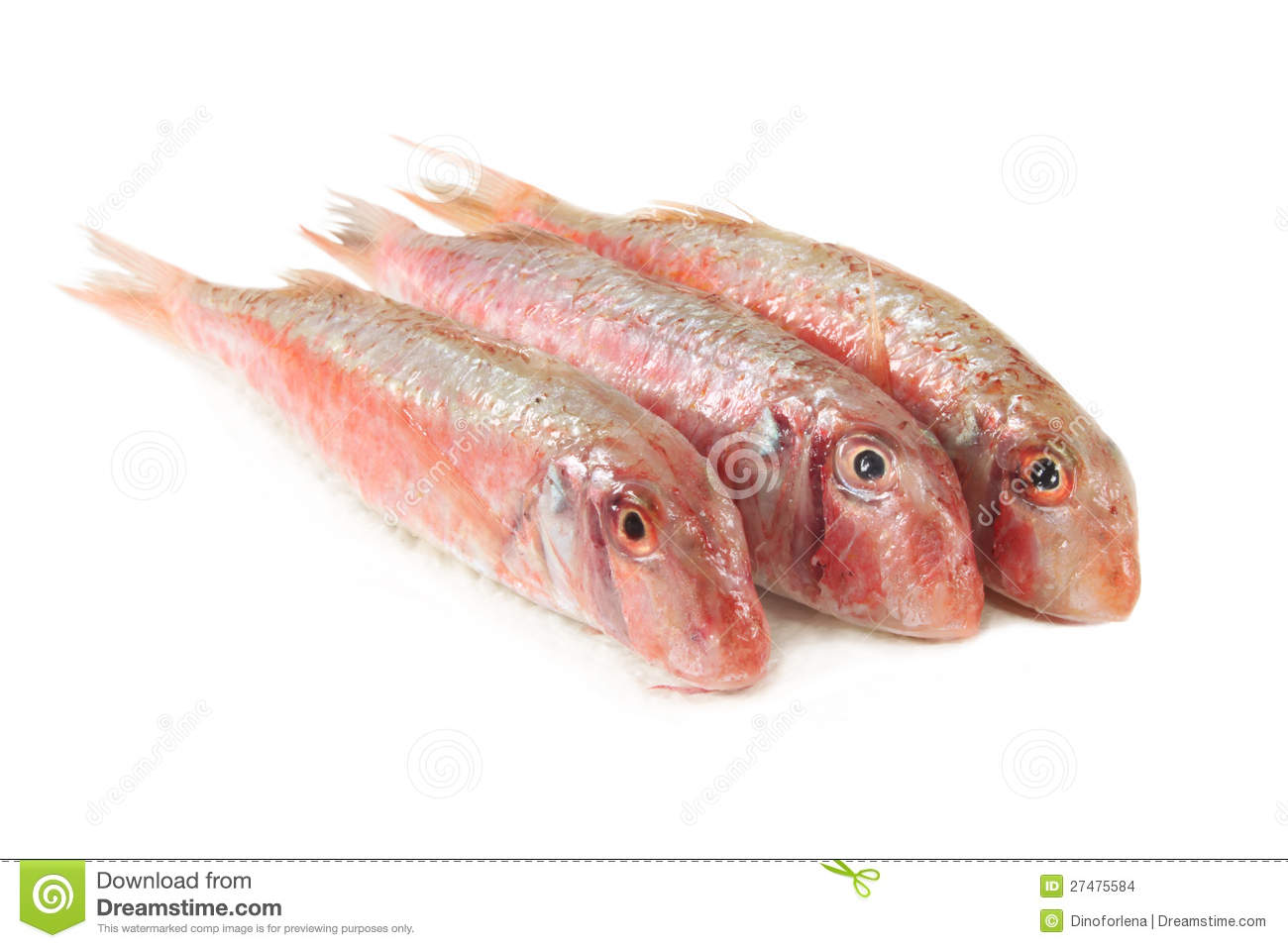 Red mullet stock images image 27475584 for Red mullet fish