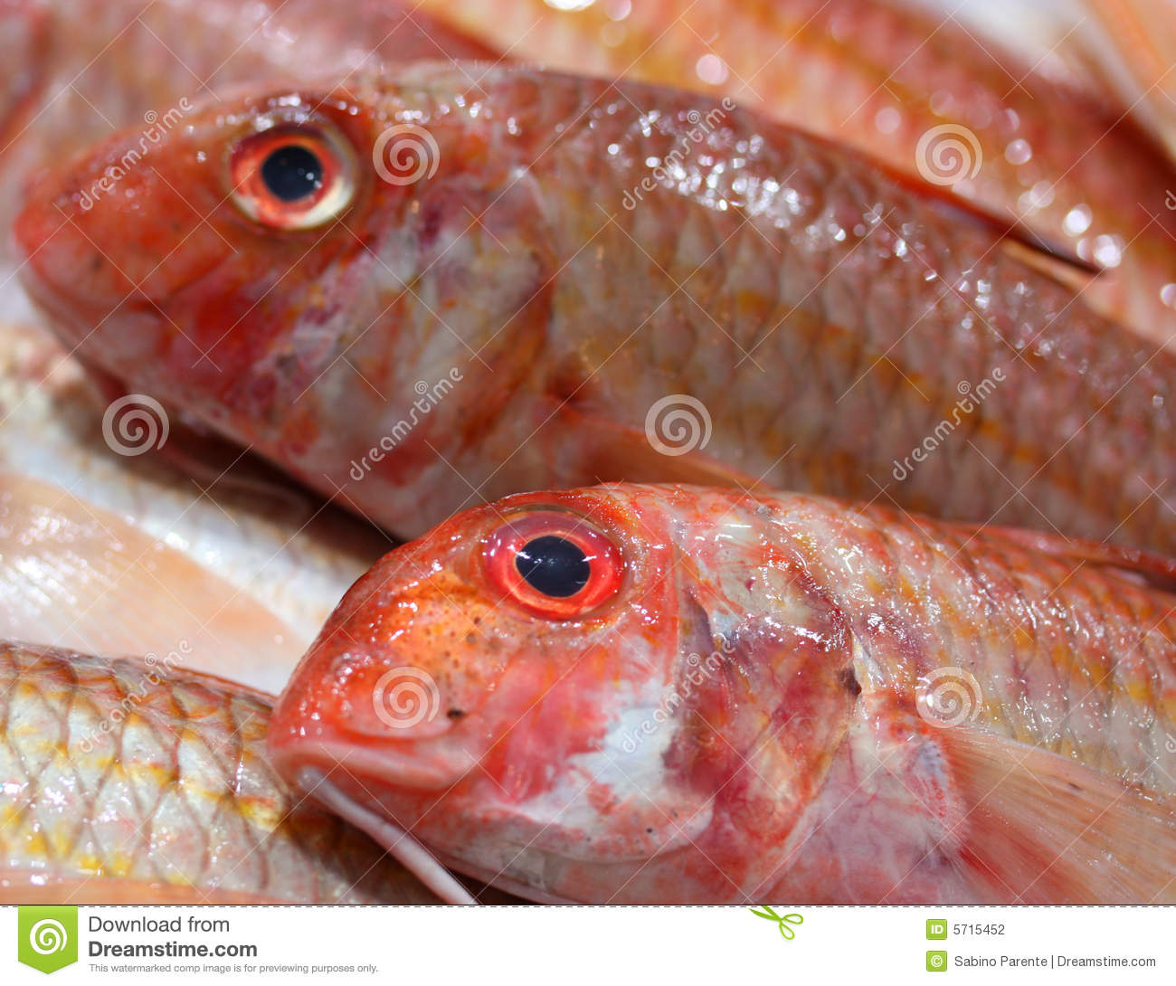 Red mullet close up stock photography image 5715452 for Red mullet fish