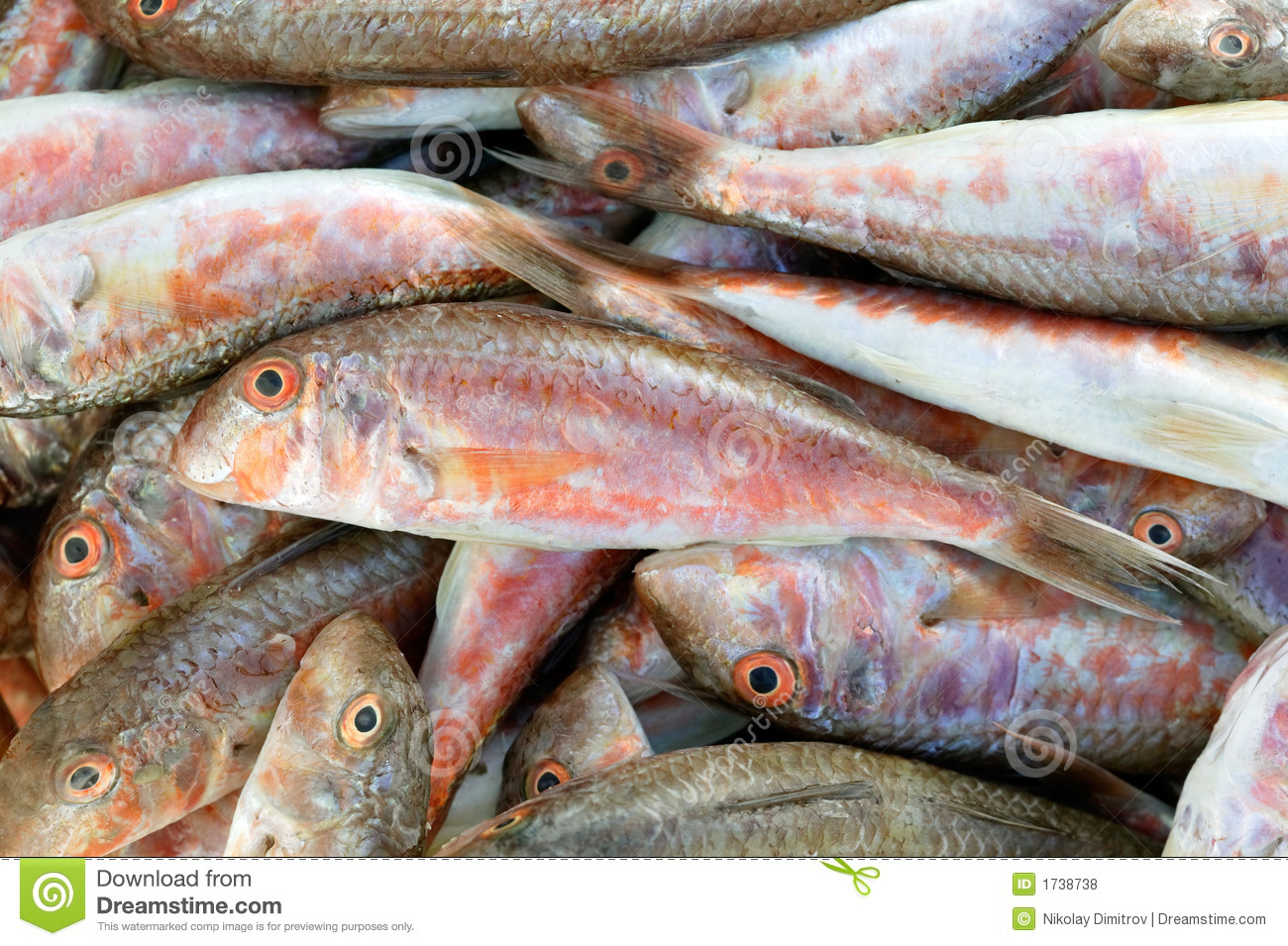 Red mullet fish royalty free stock photos image 1738738 for Red mullet fish