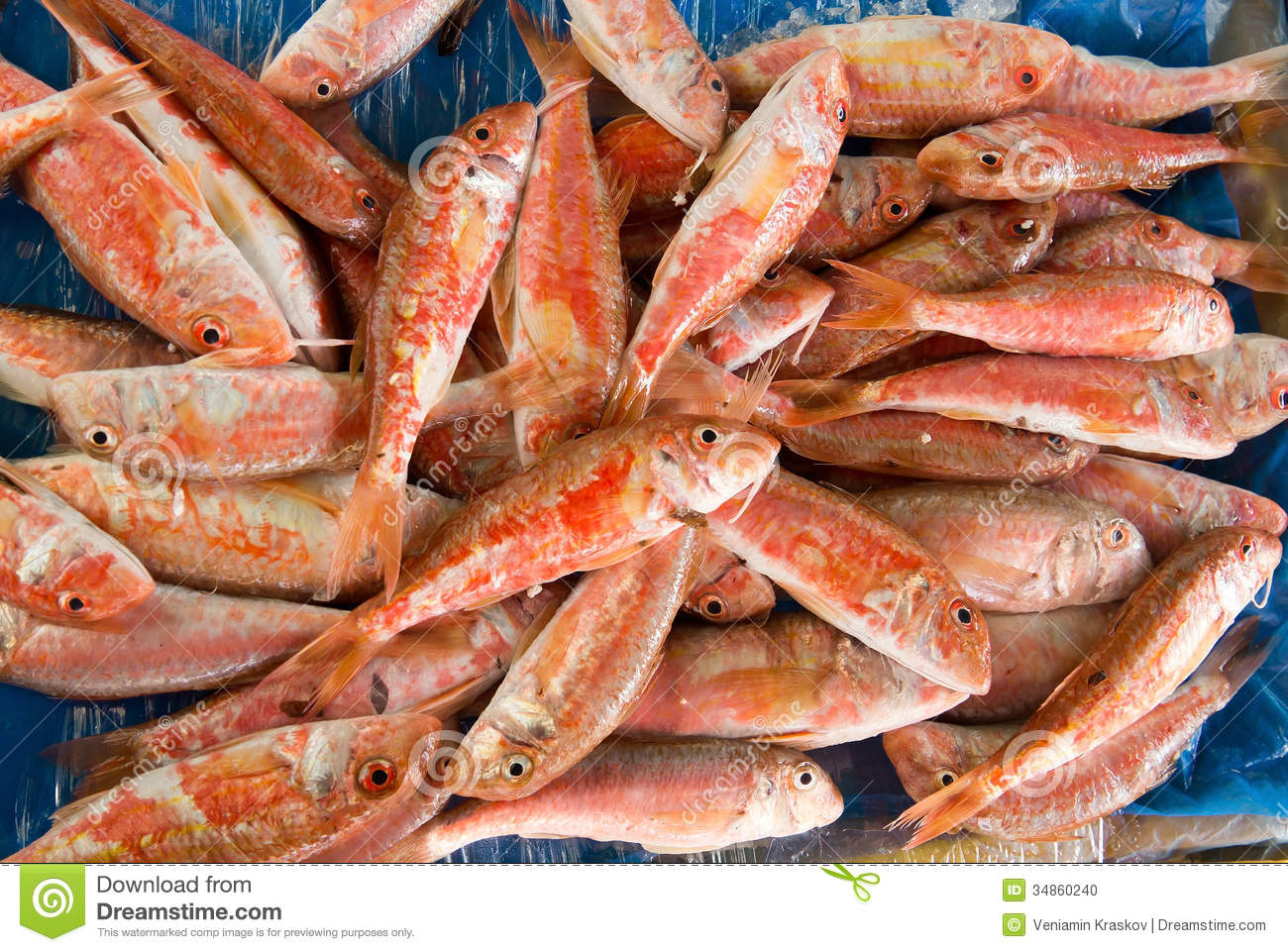 Red mullet fish stock photo image 34860240 for Red mullet fish