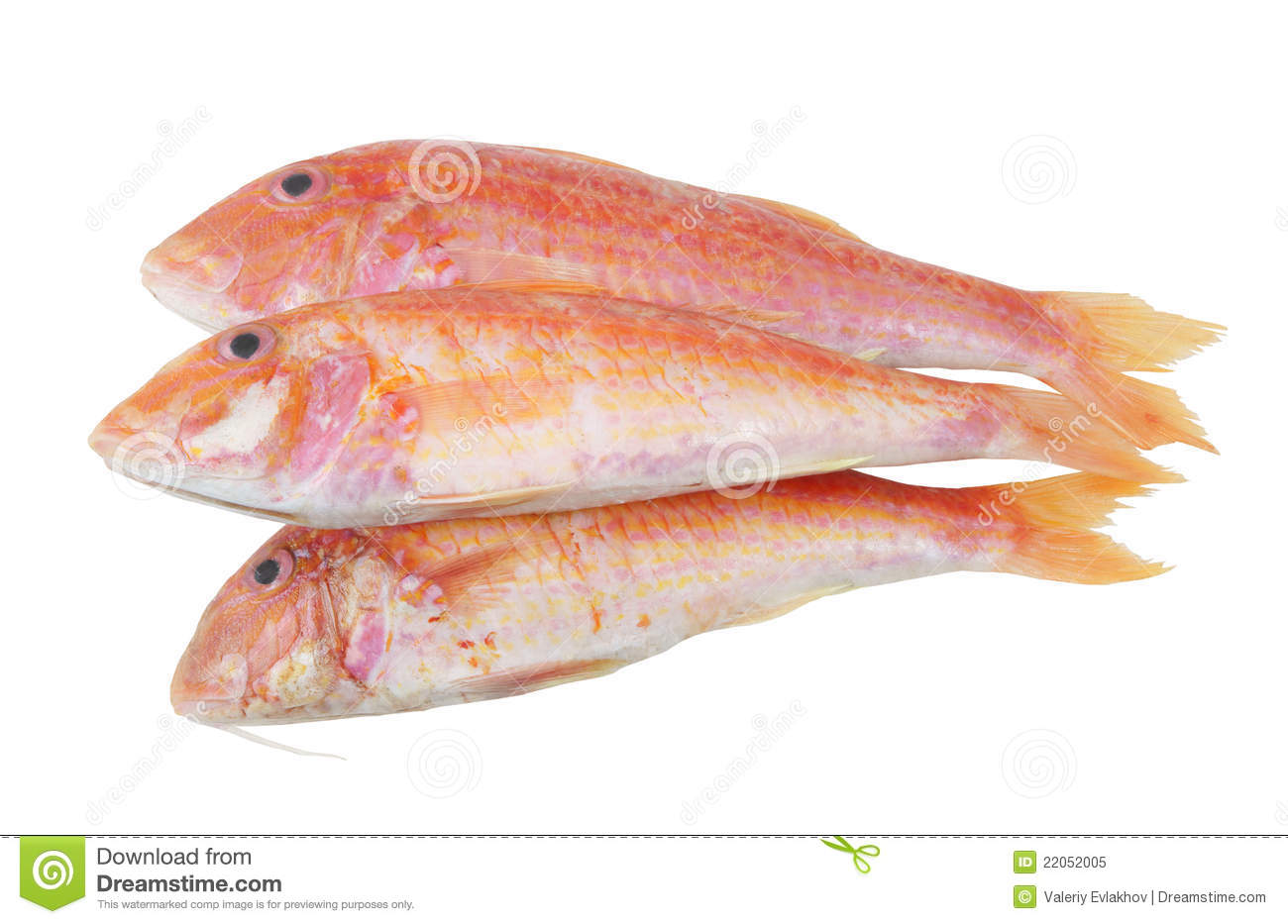 Red mullet fish isolated royalty free stock photo image for Eating mullet fish