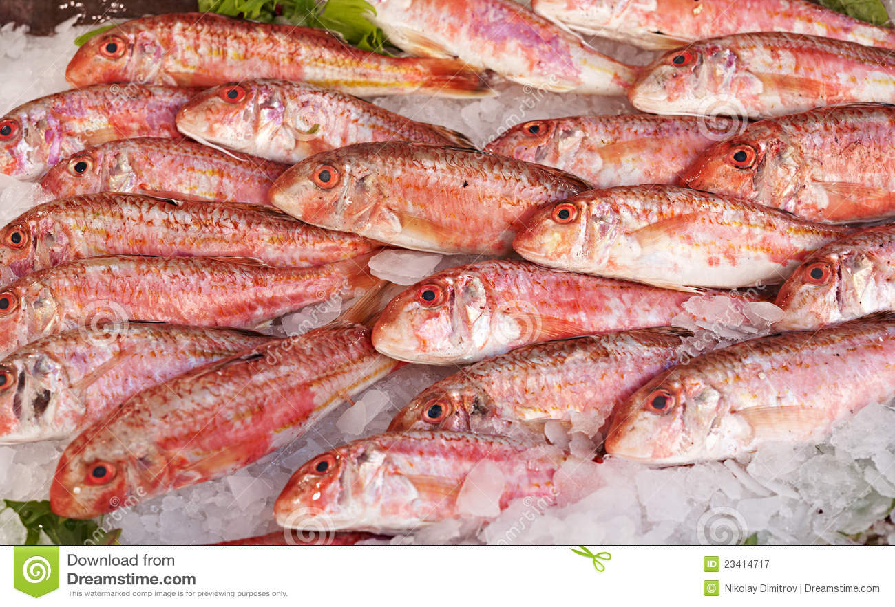 Red mullet fish for sale stock image image of fresh for Stock fish for sale