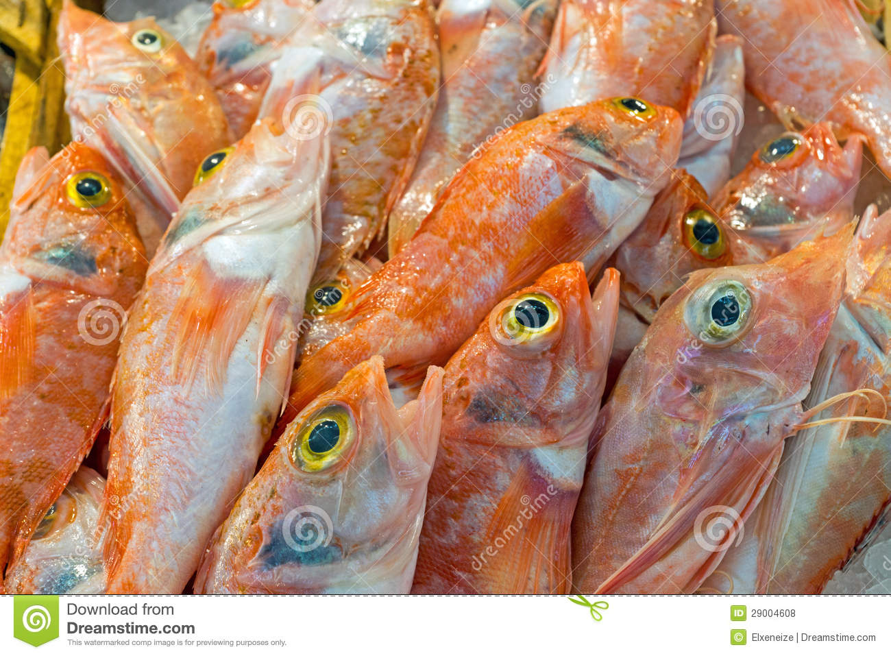 Red mullet fish for sale royalty free stock photos image for Red mullet fish