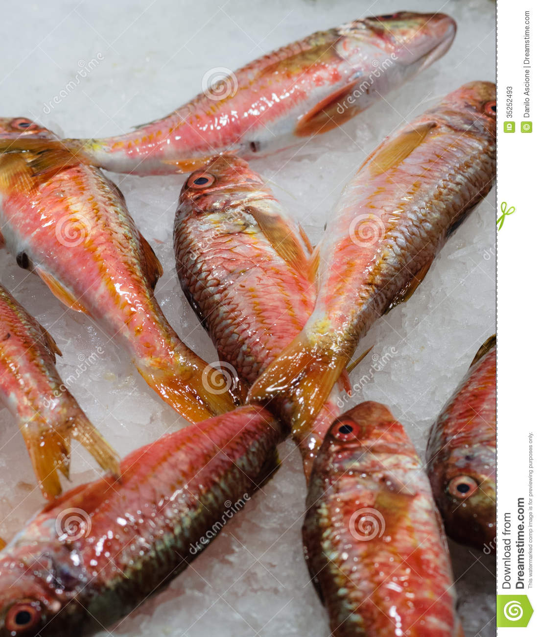 Red mullet stock photos image 35252493 for Local fish market