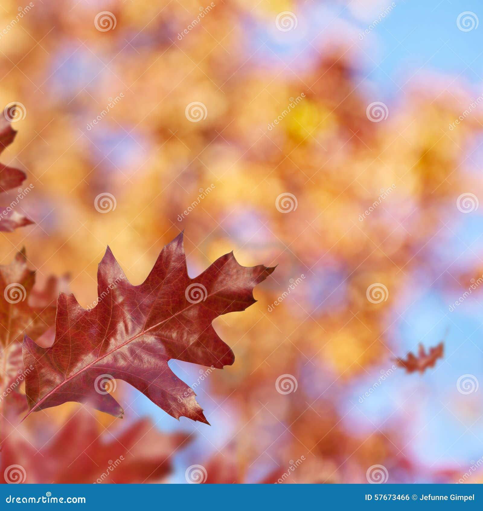Red_Oak