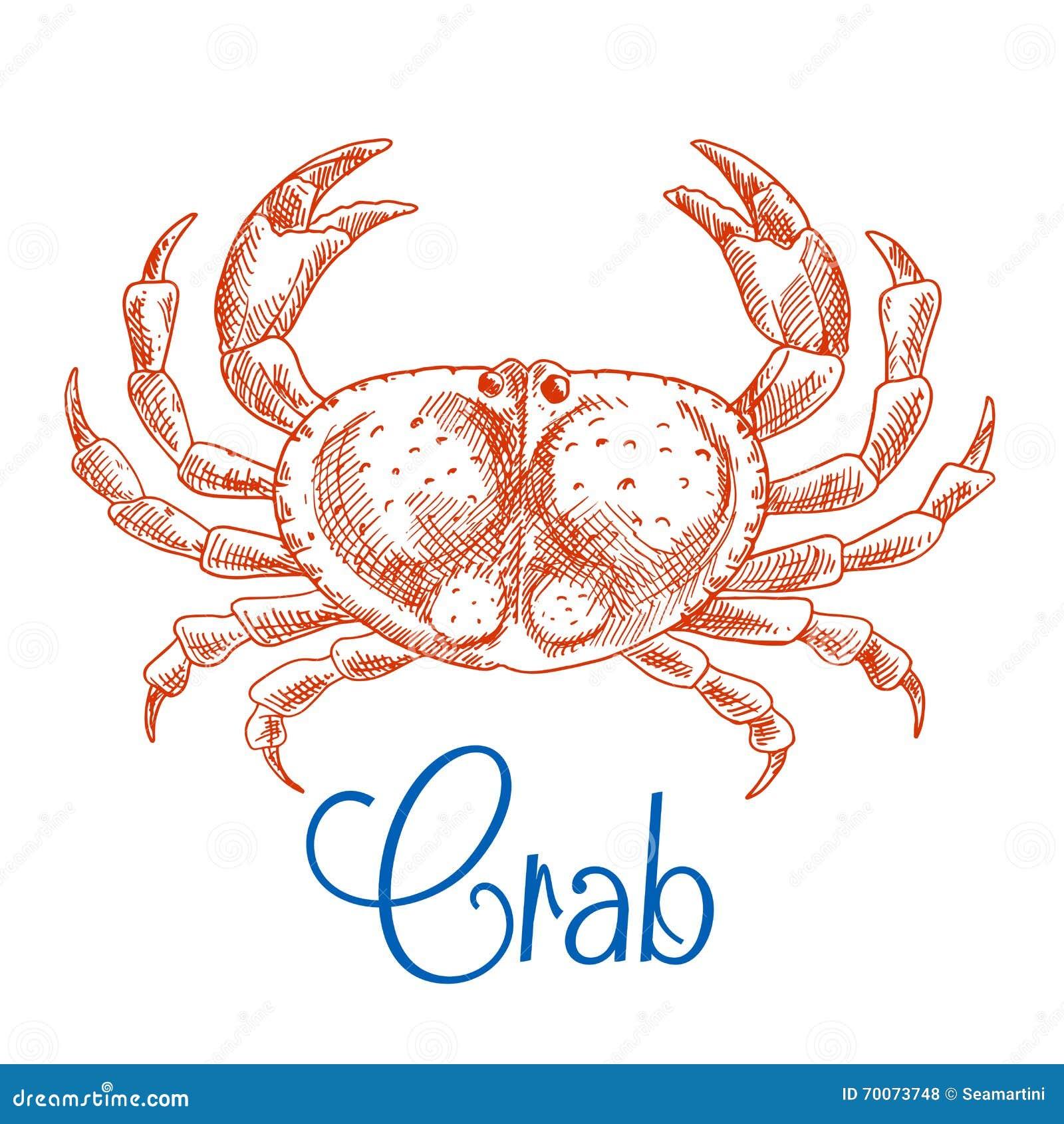 red ocean crab with big pincers sketch icon stock vector image