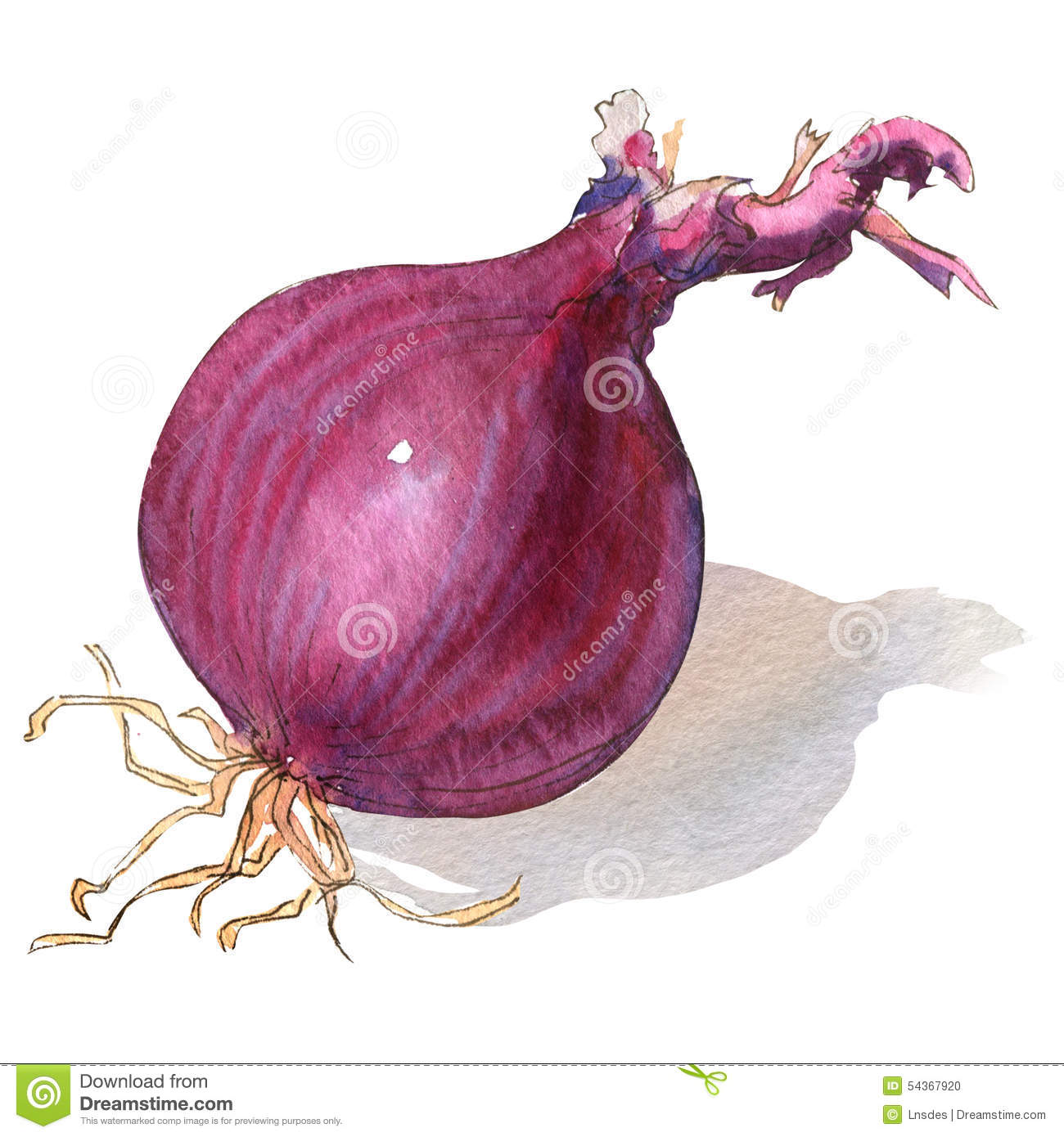 Red Onion Bulb Isolated On White Stock Illustration ...