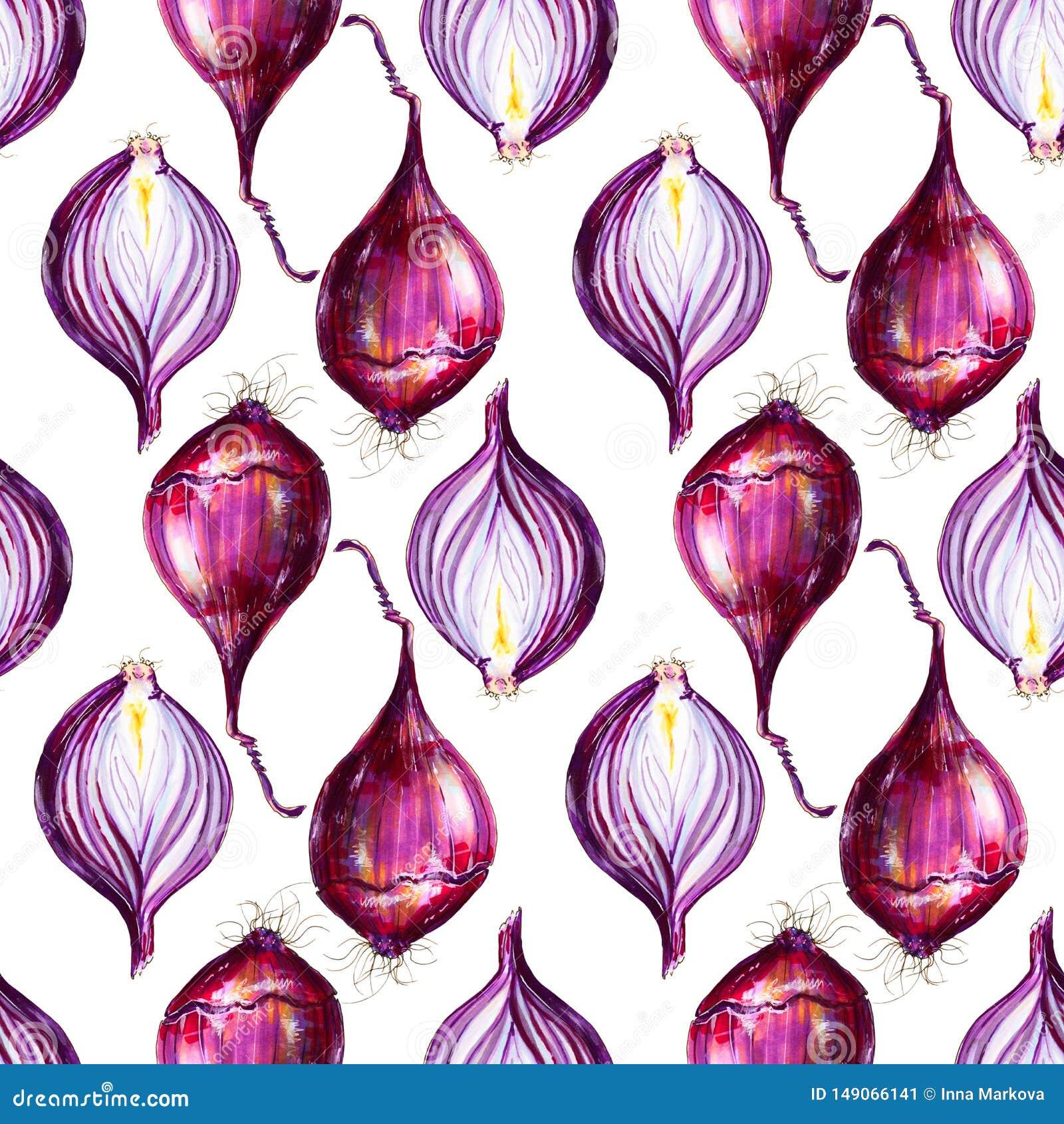 Red Onion In Cut Illustration. Hand-drawn Healthy Food ...