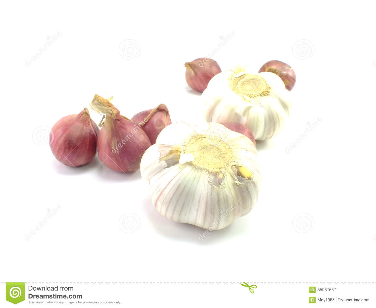 Red Onion Illustration Red onion and garlice isolated