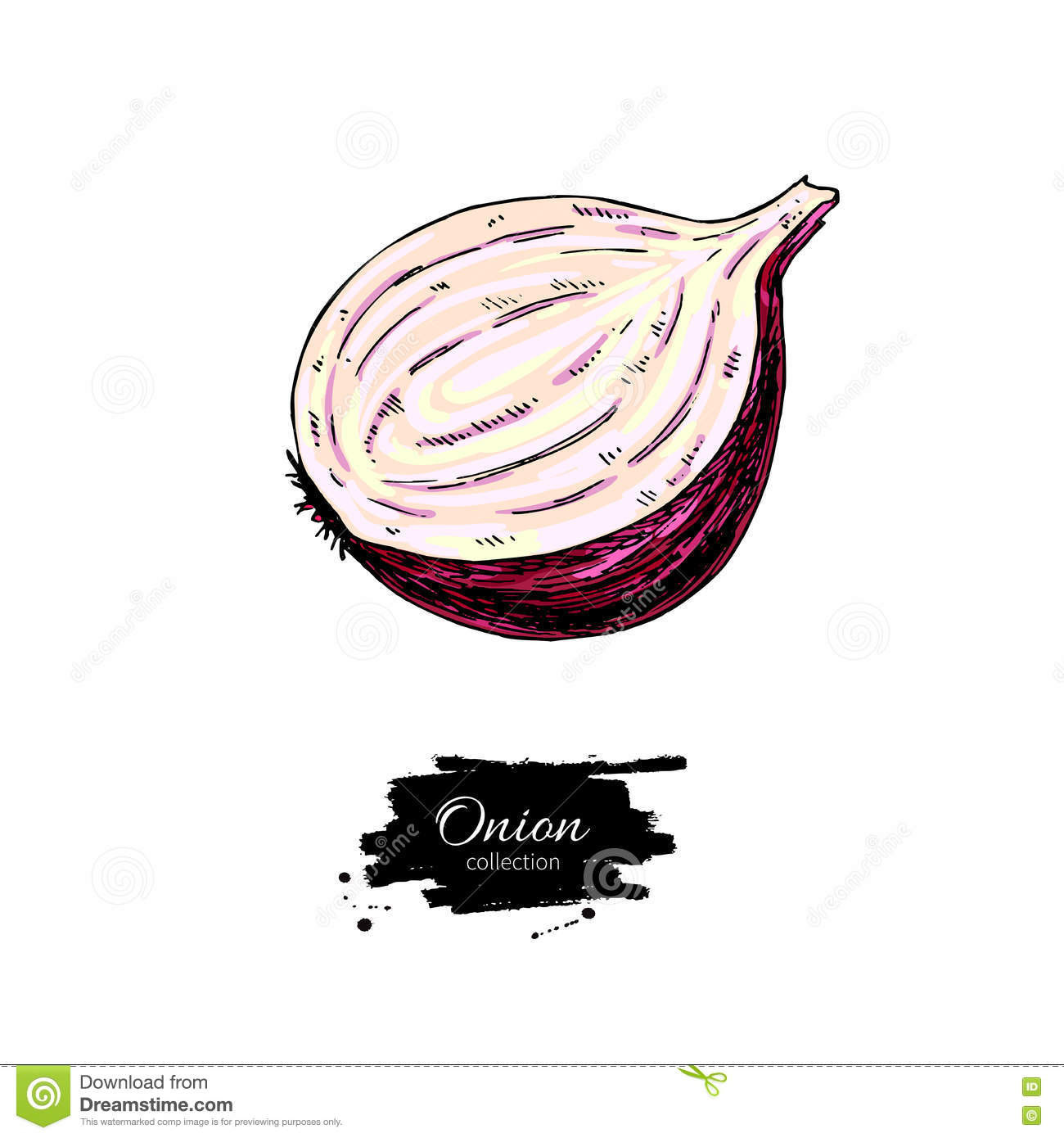 Red Onion Illustration Red Onion Hand ...