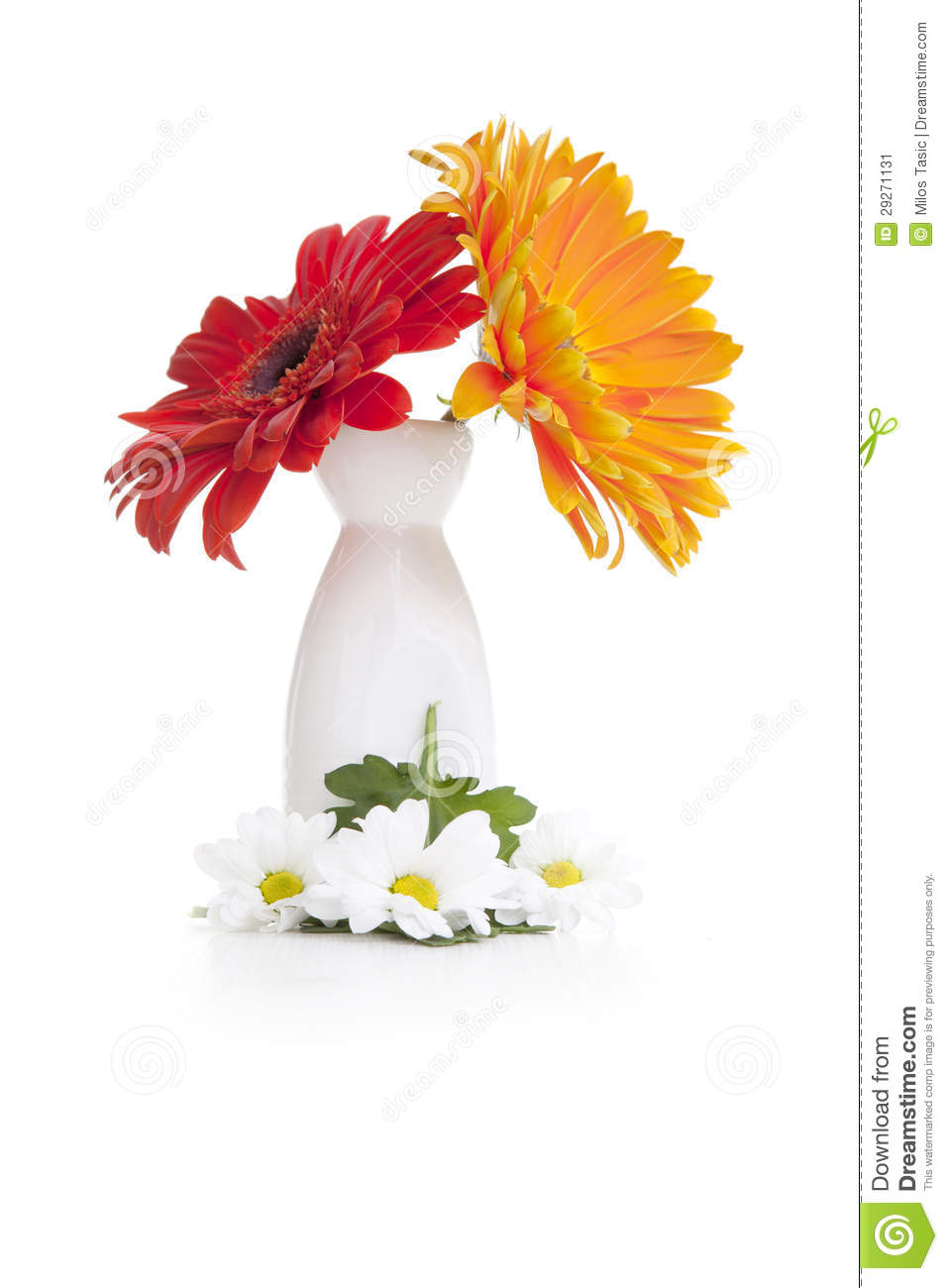 Red And Orange Daisy Flowers In White Vase Stock Image ...