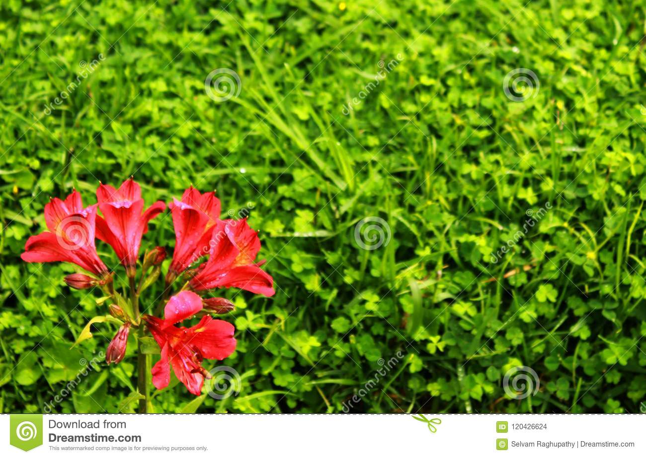 Red ornamental flowers at bryant park in the kodaikanal stock photo red ornamental flowers at bryant park in the kodaikanal kodaikanal is a city near palani in the hills of the dindigul district in the state of tamil nadu izmirmasajfo