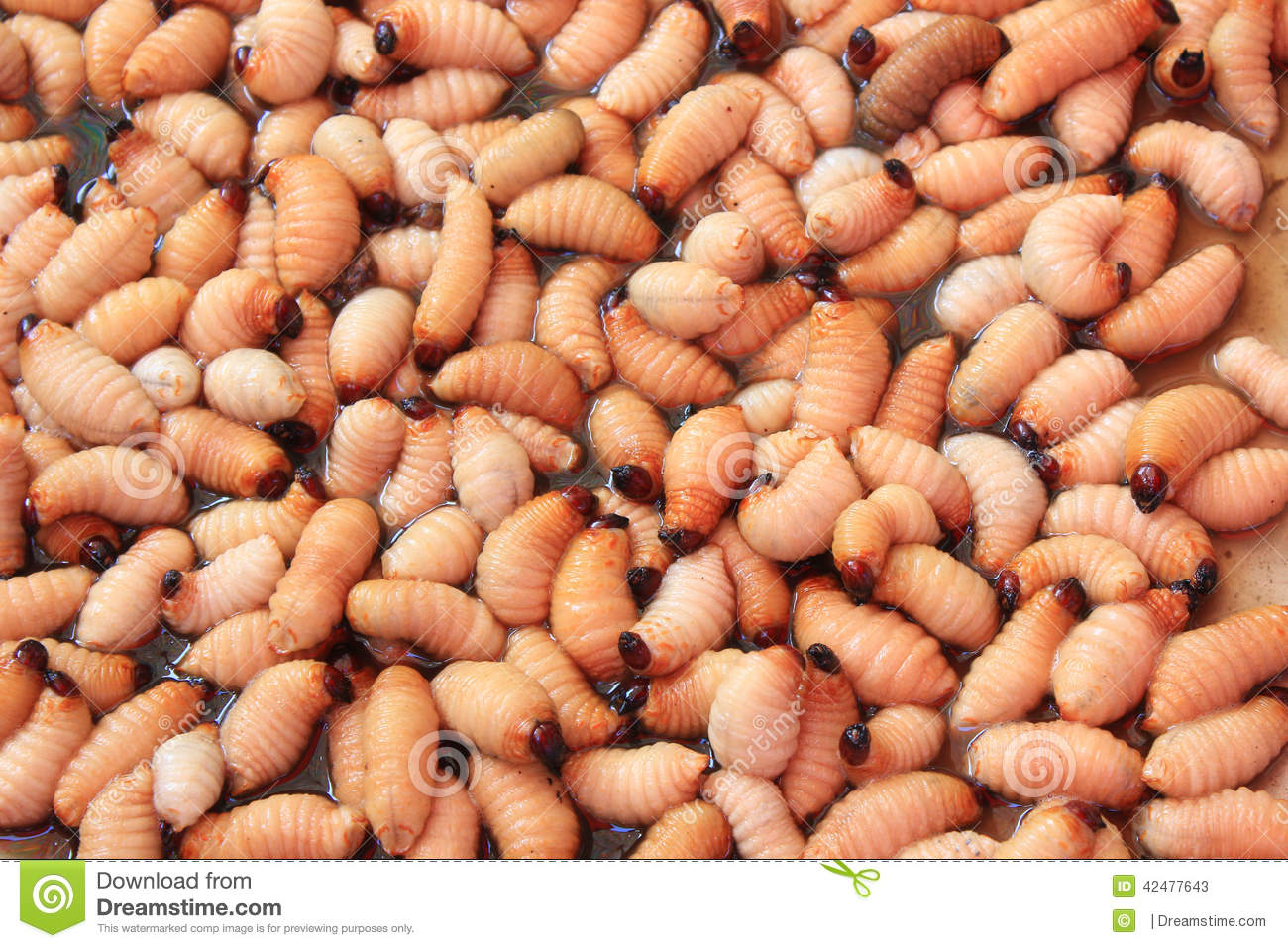Best Red Worm Food