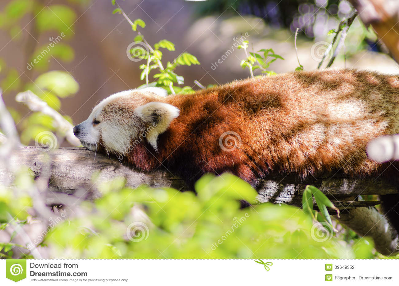 Cat Dangling From Tree Free Cartoon Image