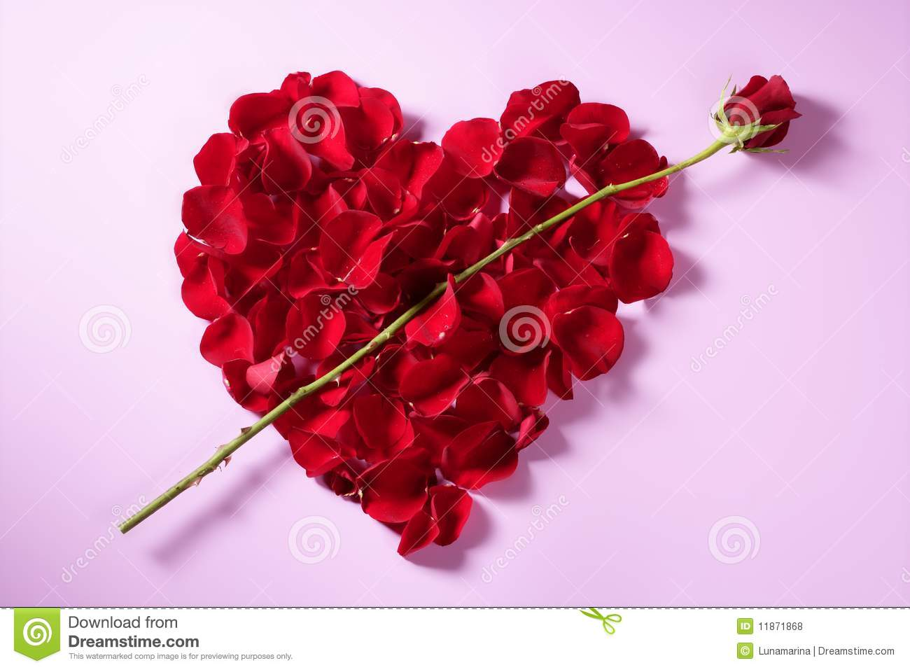 red petals heart, valentines flowers metaphor royalty free stock, Beautiful flower