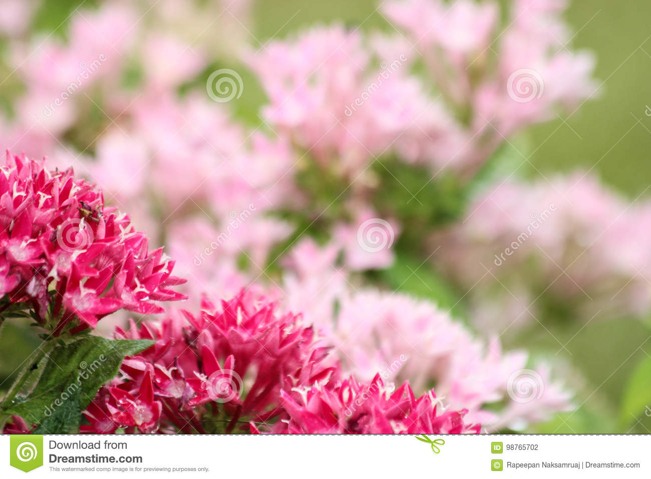 Red And Pink Flowers Blurred Background Stock Photo Image Of Card