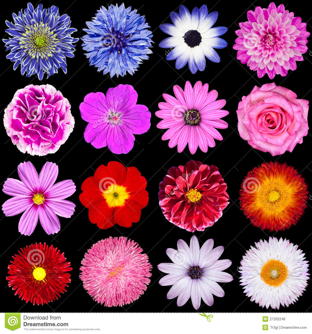 Red Pink Purple Blue And White Flowers Isolated Stock Photo
