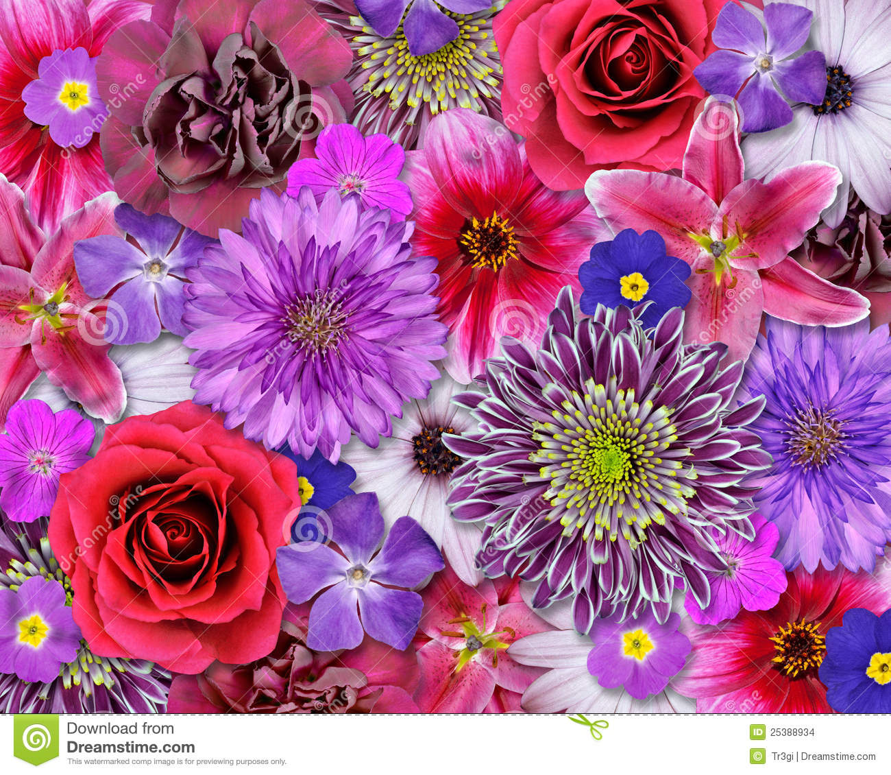 Red, Pink, Purple Flower Background Stock Photo - Image of ...