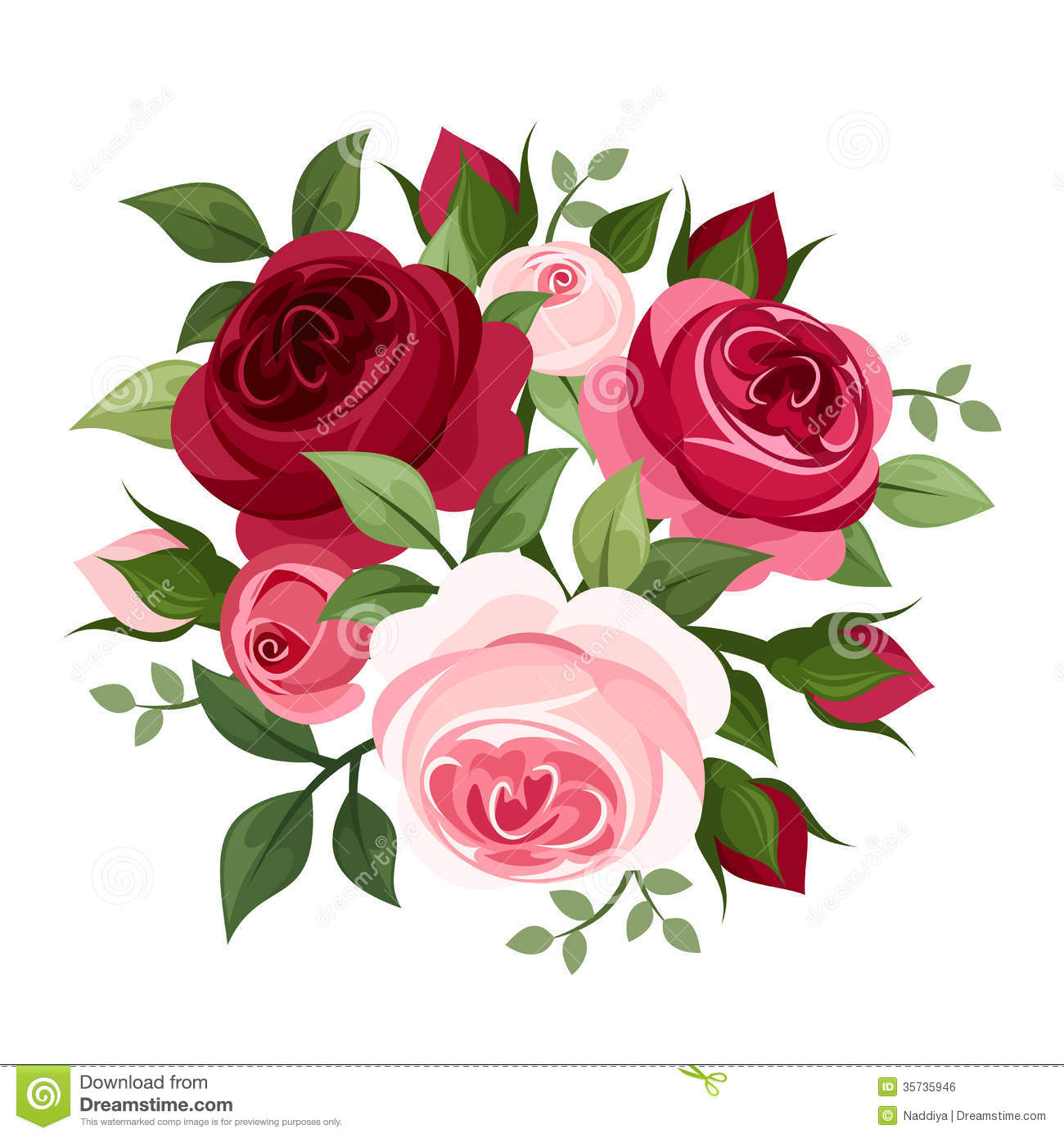 And pink english roses and rose buds isolated on a white background