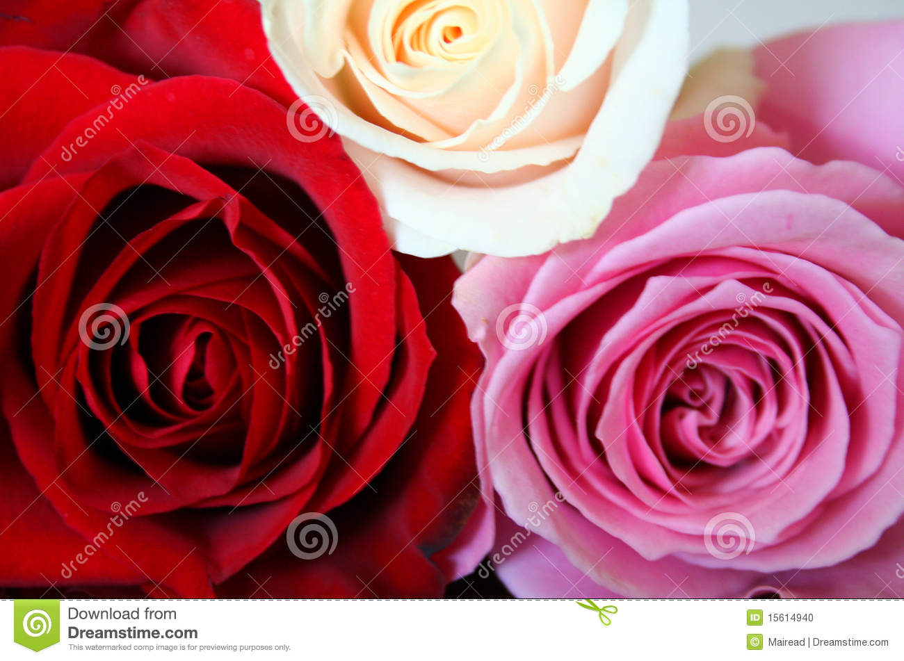 Red, Pink And White Roses Stock Photo - Image: 15614940