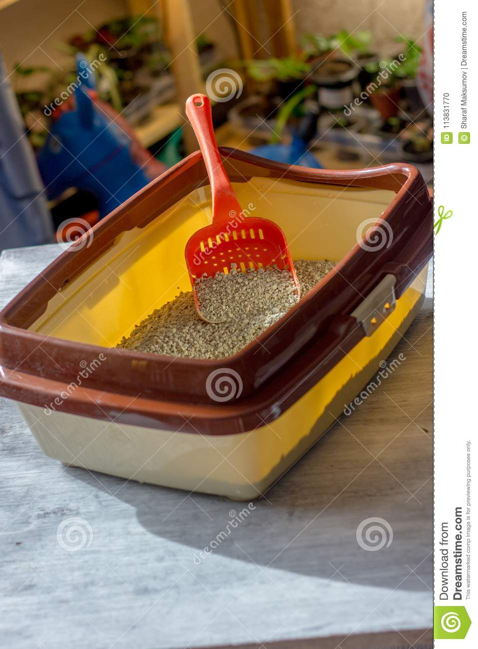 Red plastic scoop with the cat litter in a box.