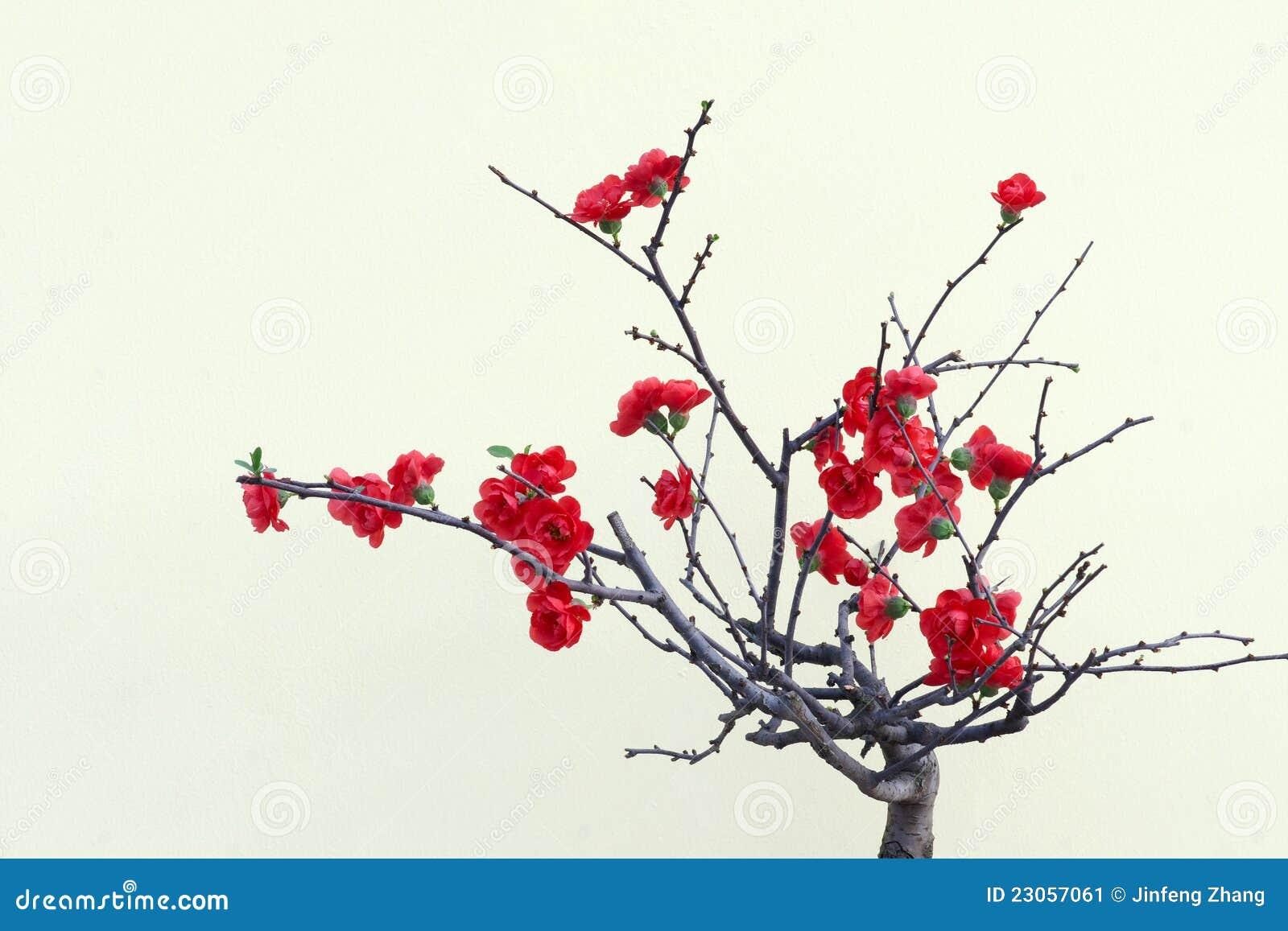 Red plum blossom