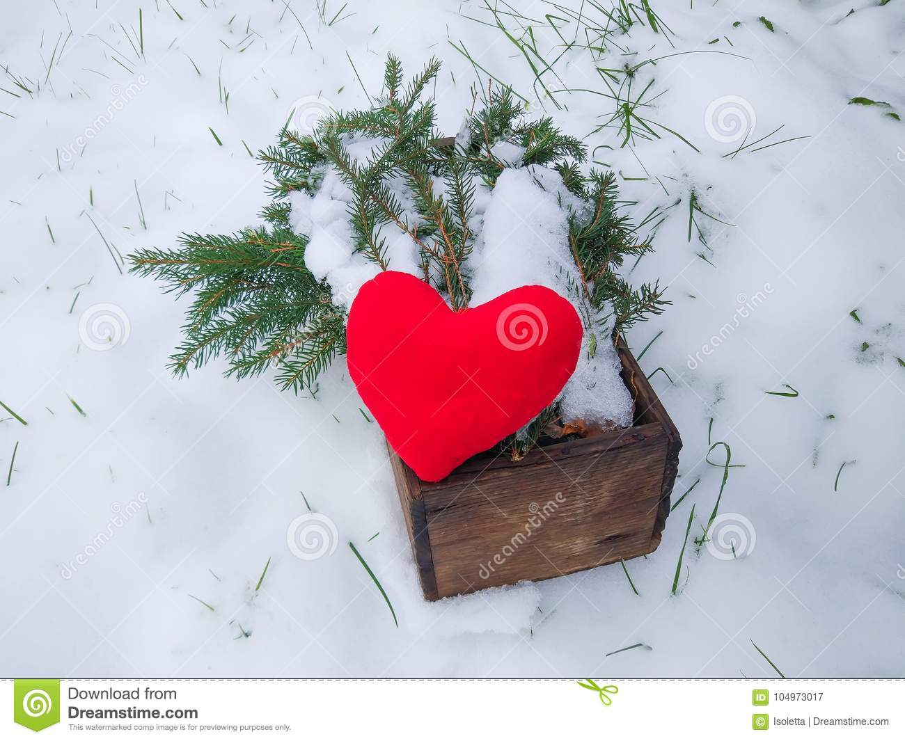Red plush heart and fir tree branches in wooden box in winter garden.