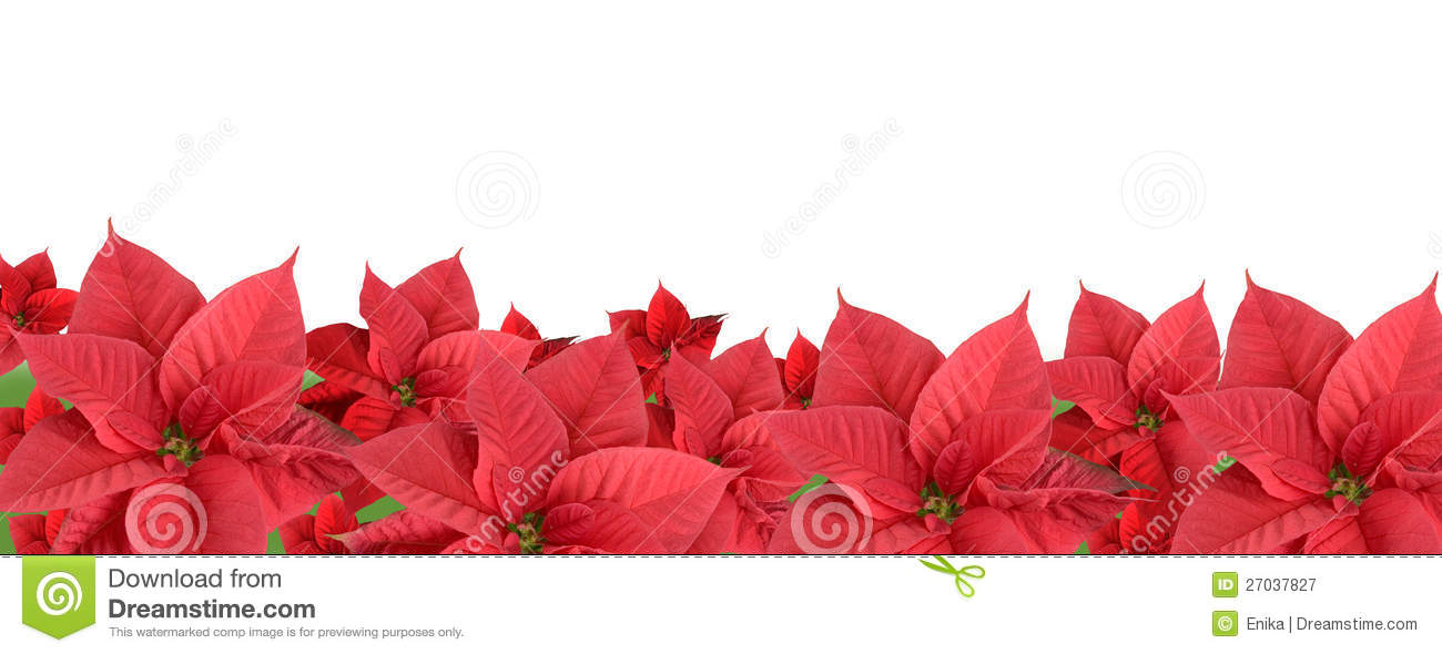 red poinsettia border stock image image of cold