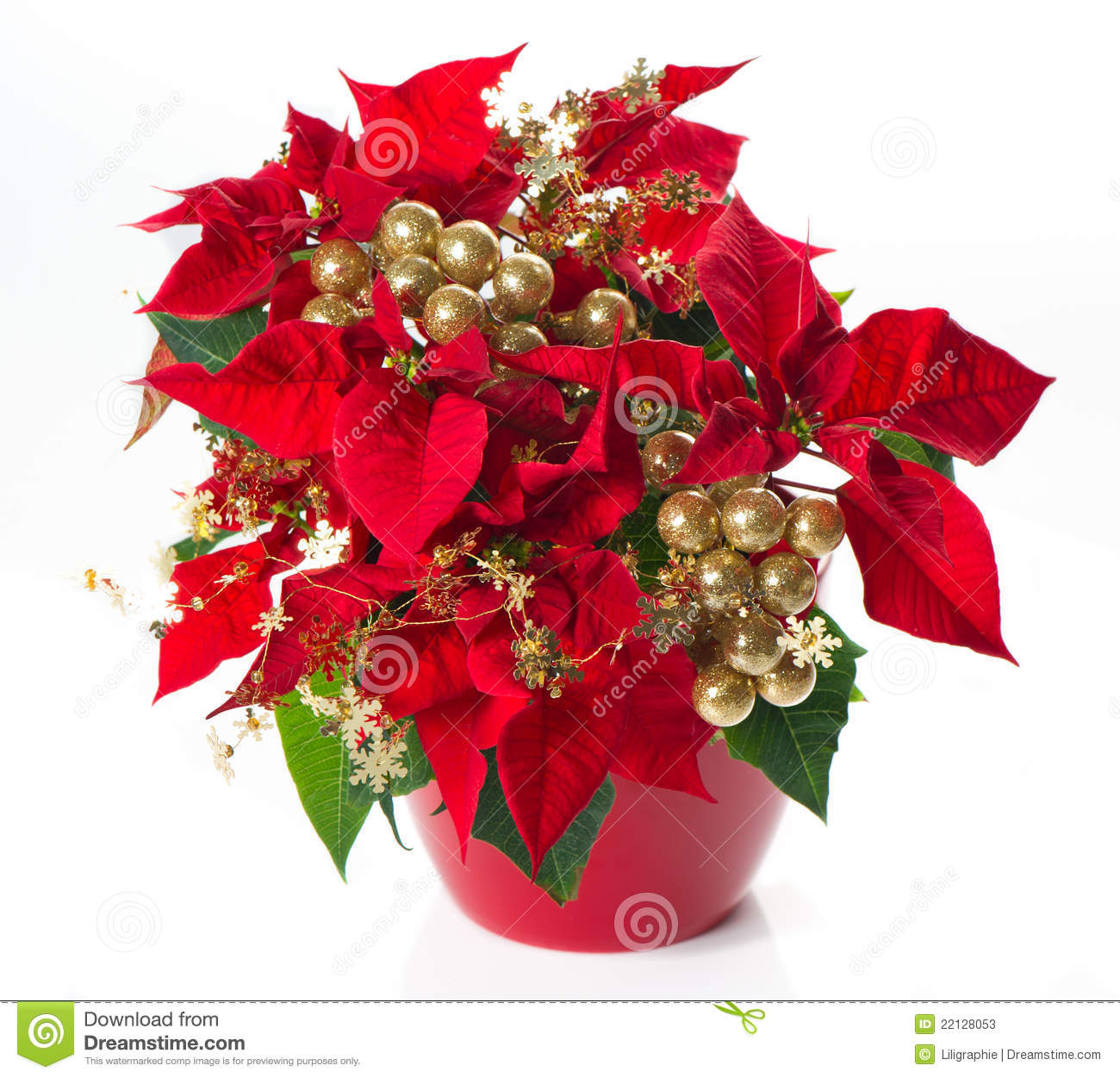 red poinsettia christmas flower with golden deco stock image image 22128053. Black Bedroom Furniture Sets. Home Design Ideas