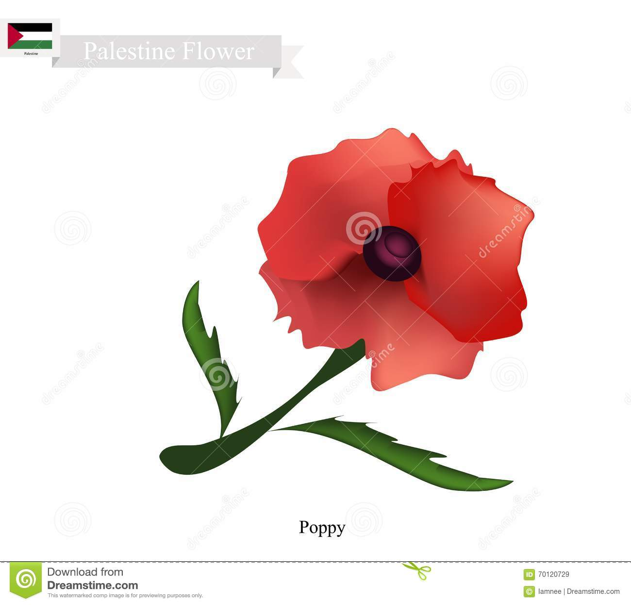 Red Poppies The Popular Flower Of Palestine Stock Vector