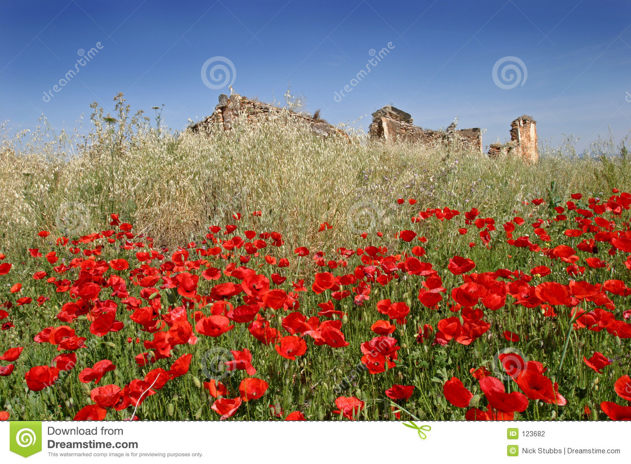 Red poppies in a sunny field with blue sky