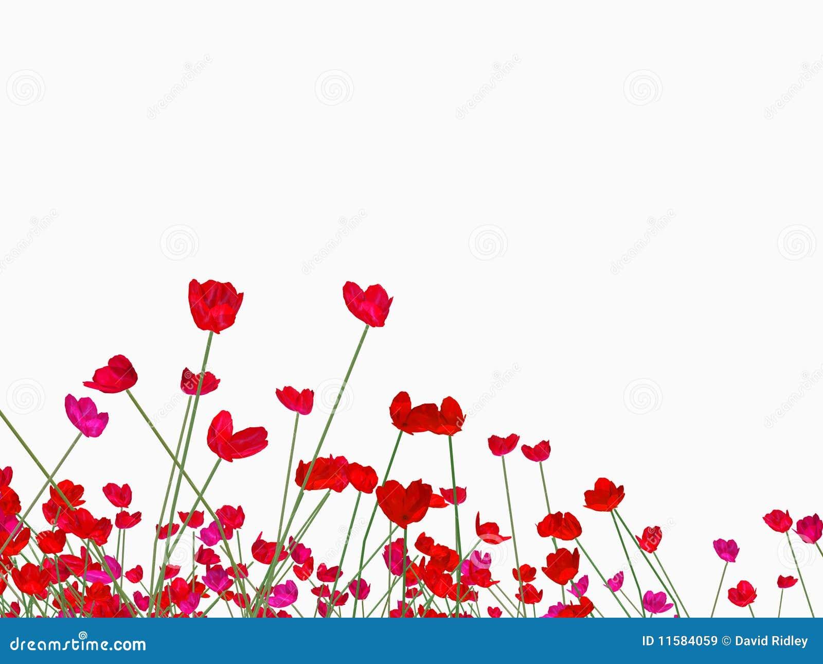 poppy red background - photo #42
