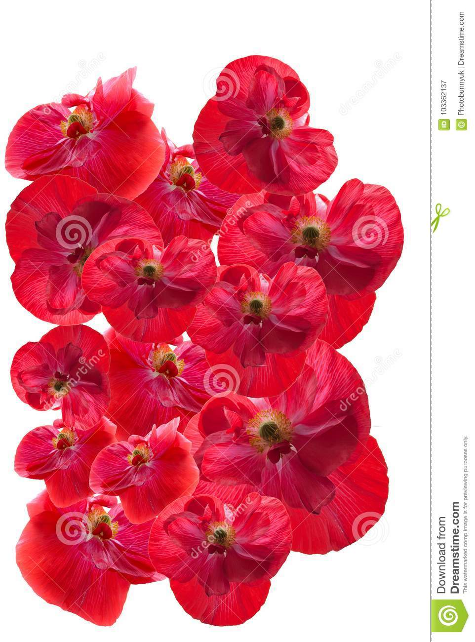 Red Poppies On A White Background Stock Image Image Of Symbolic