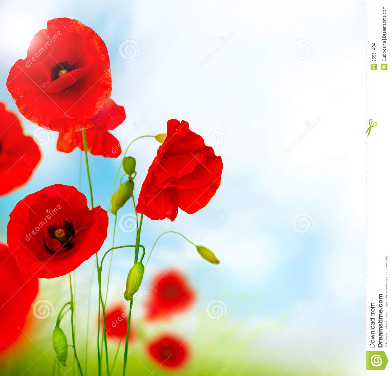 Download Red Poppy Flower stock photo. Image of floral, bloom - 25561484