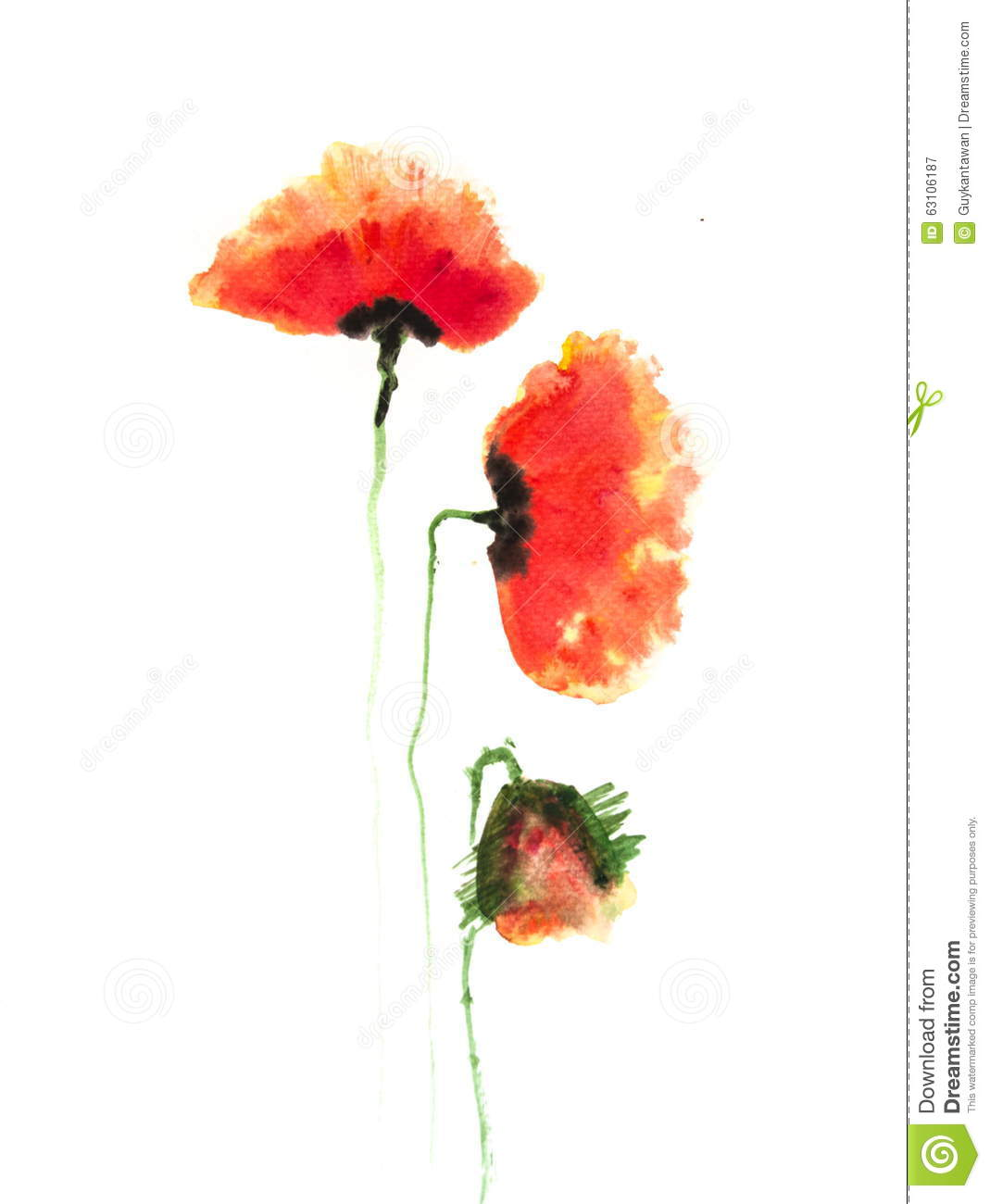 Red Poppy Flowers Acrylic Color Painting Illustration 63106187