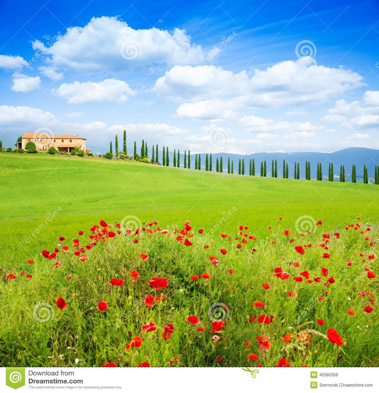 red poppy flowers tuscany landscape italy trees row house 40580356