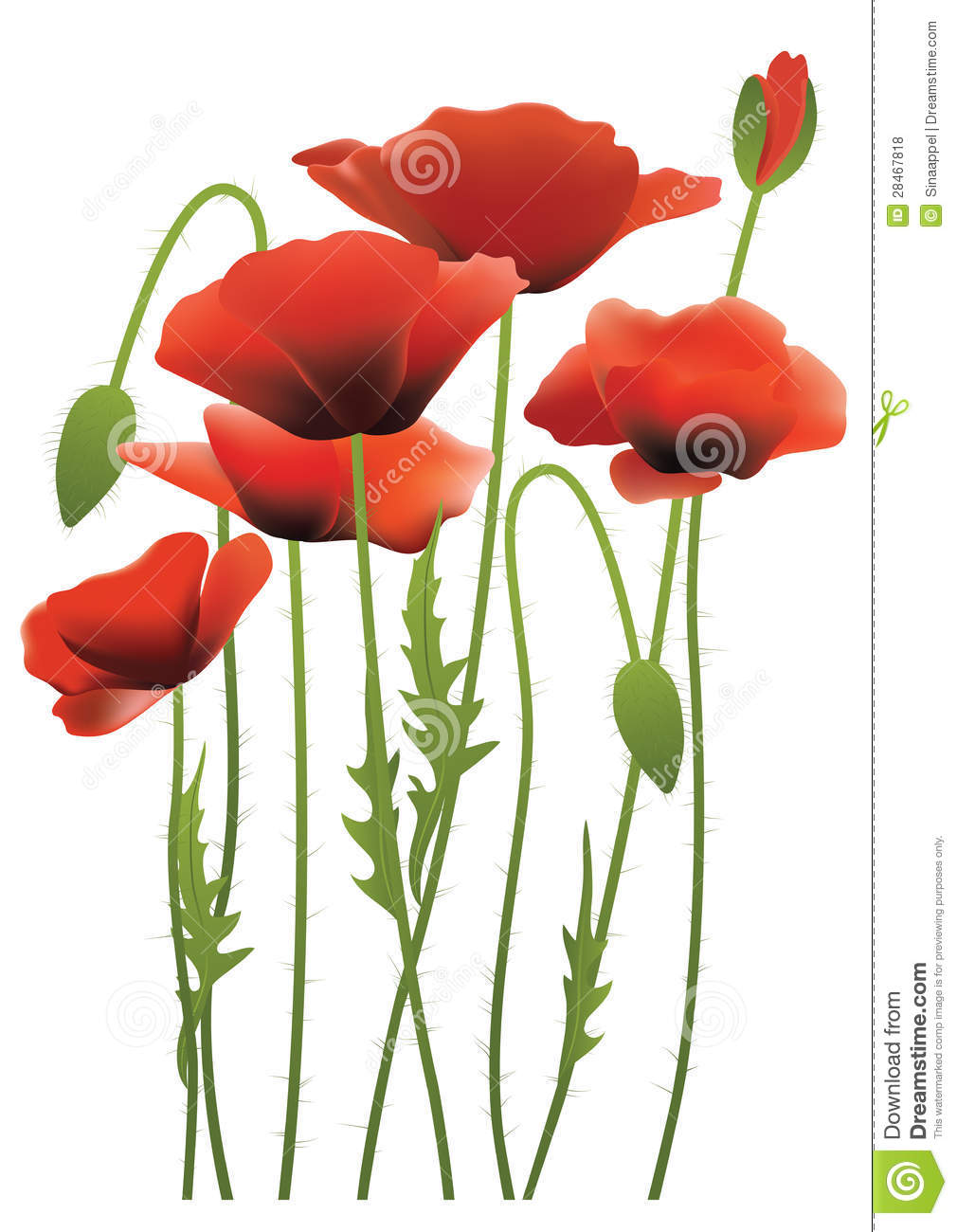 Red poppy flowers vector illustration stock vector illustration royalty free stock photo mightylinksfo Images