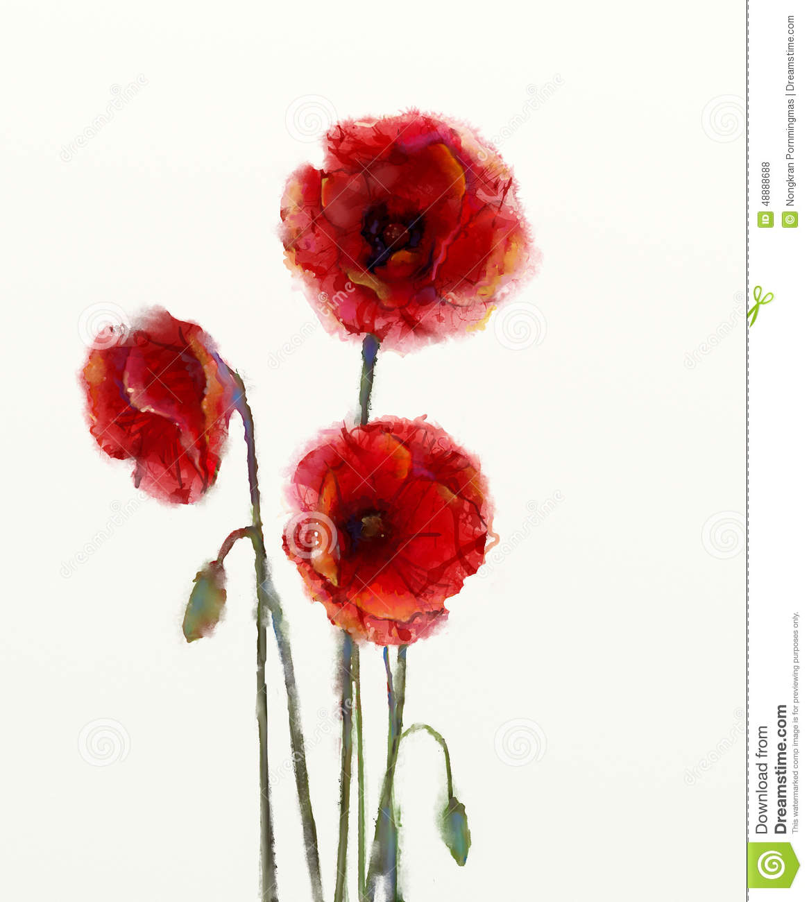 Red Poppy Flowers Watercolor Painting Illustration 48888688 Megapixl