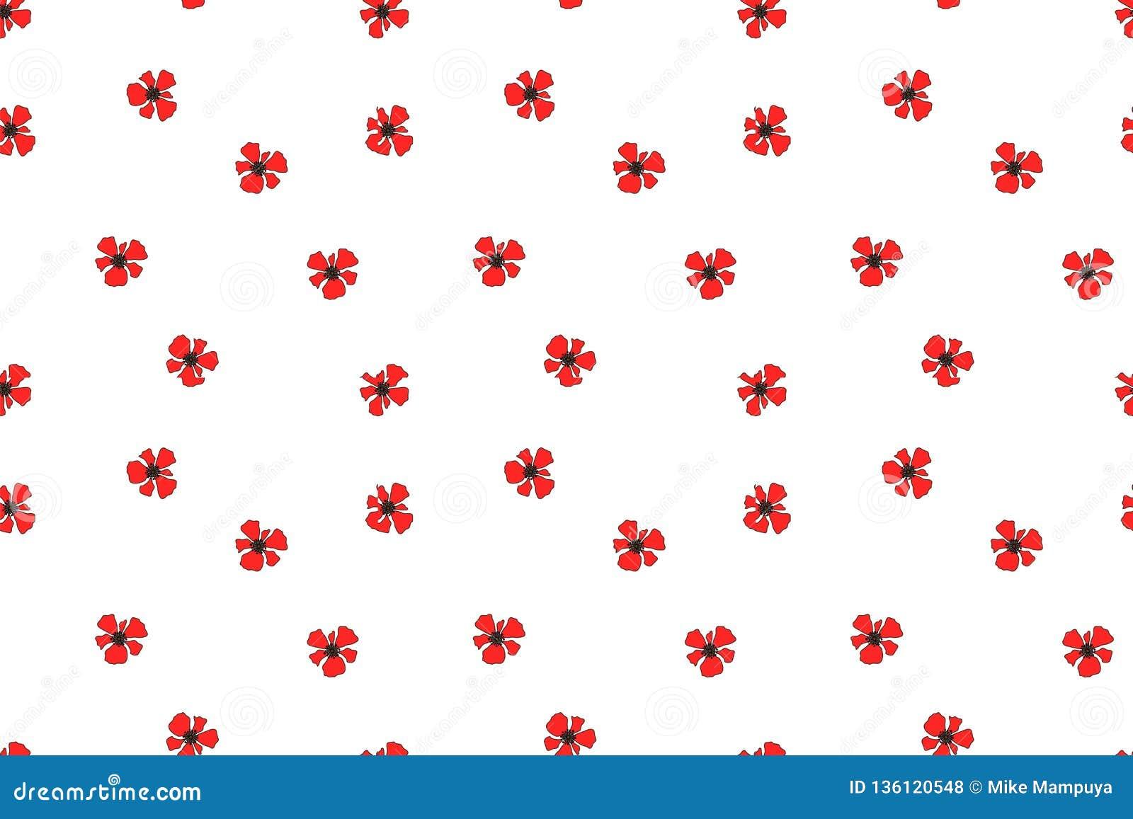 Red Poppy National Flower Of Belgium, Poland Albania Stock ...