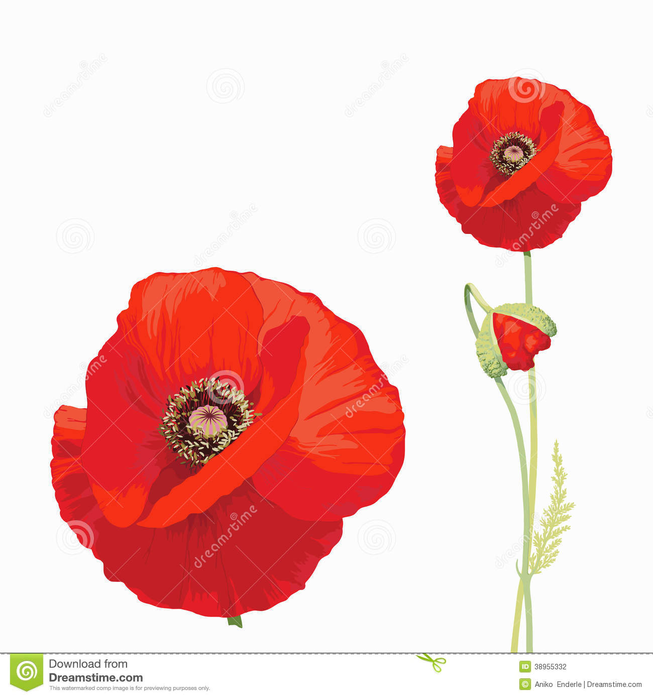 Red Poppy Papaver Rhoeas Stock Vector Image 38955332