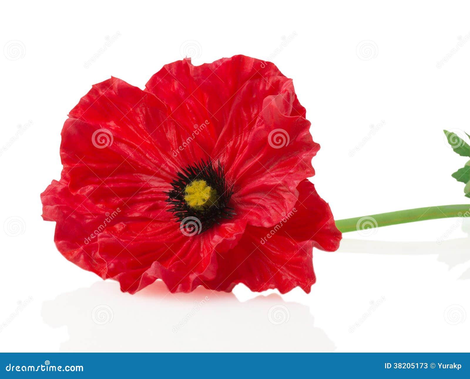 poppy red background - photo #10