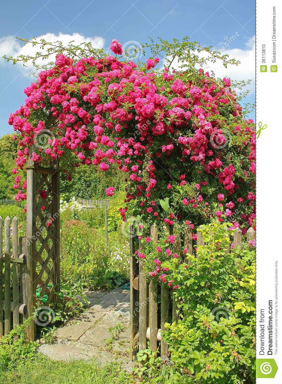 red rambler rose on an arched garden entrance stock photo. Black Bedroom Furniture Sets. Home Design Ideas