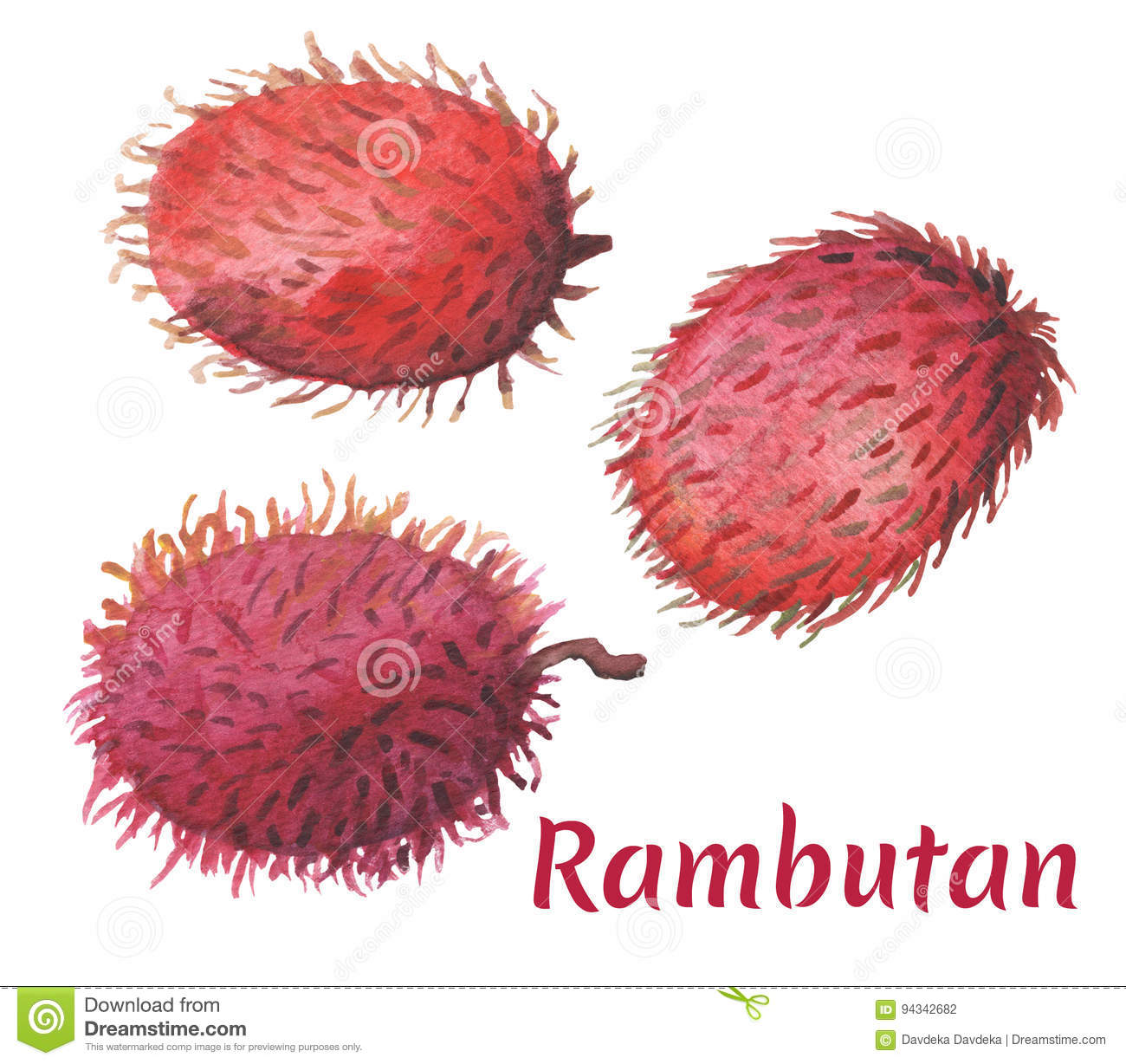 red rambutan on white background. tropical fruit watercolor painting