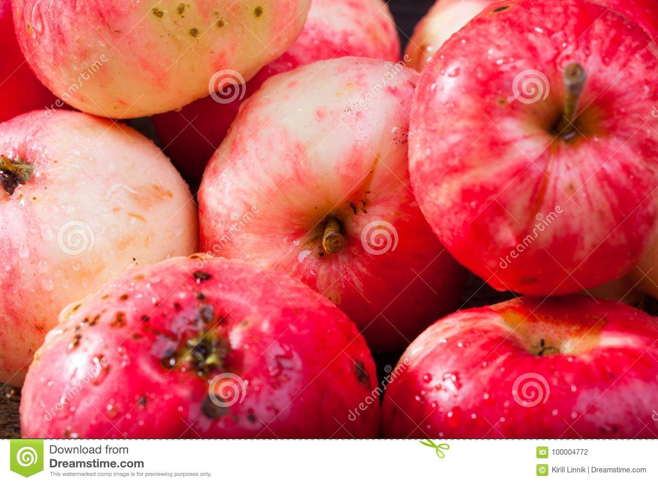 Download Red ripe apples stock photo. Image of ripe, diet, fruit - 100004772