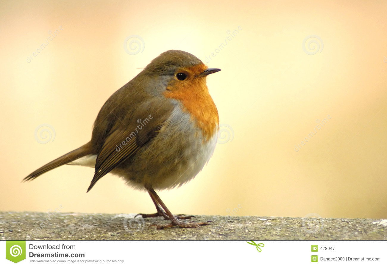 Red Robin Royalty Free Stock Photography - Image: 478047