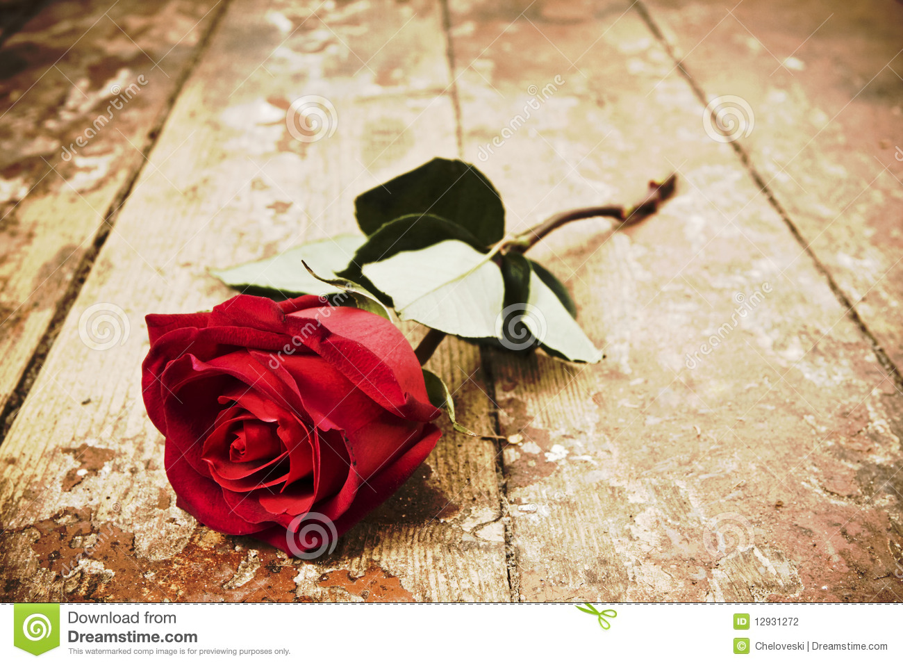 red rose stock photography image 12931272