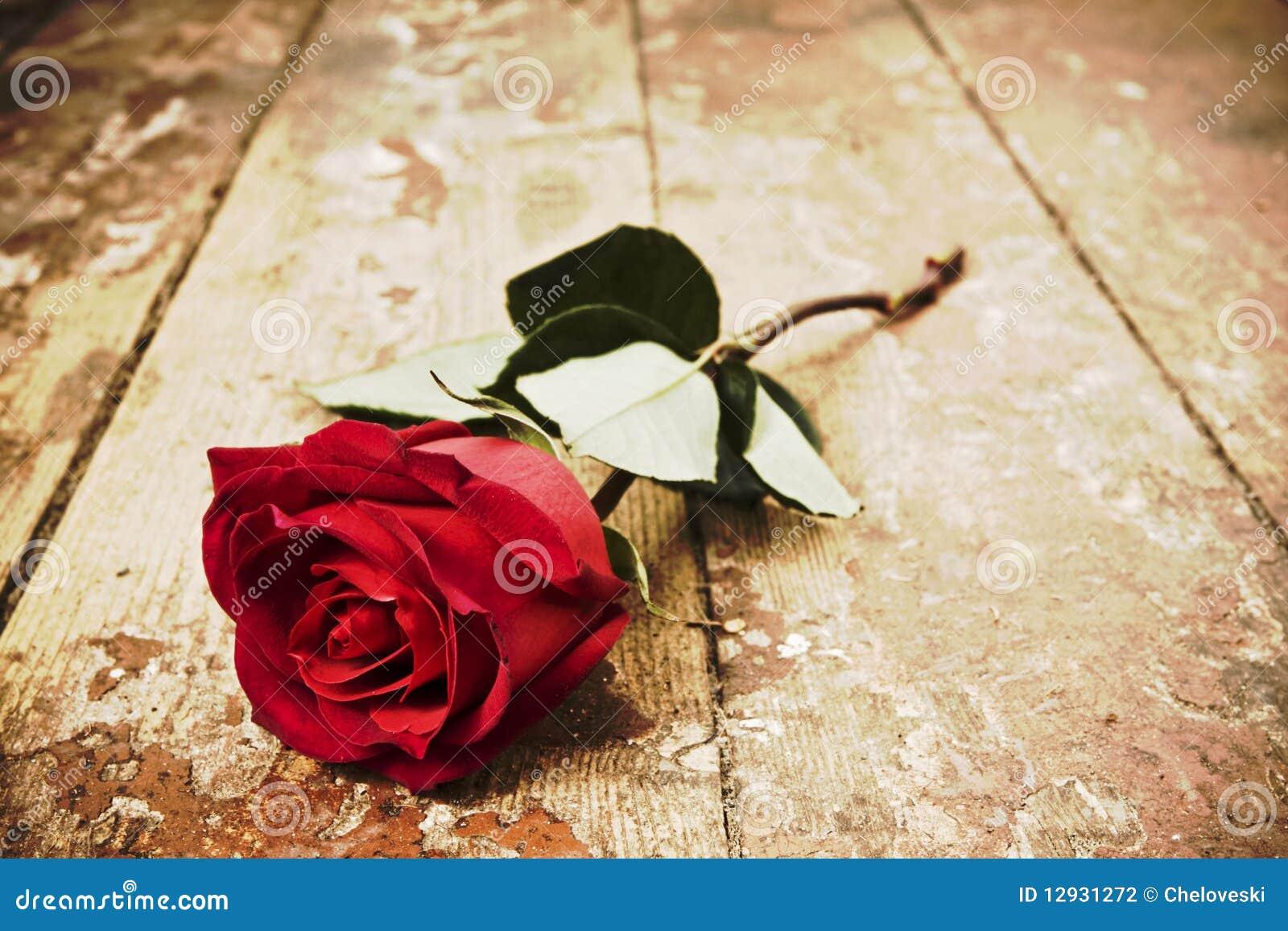 red rose stock photography image 12931272. Black Bedroom Furniture Sets. Home Design Ideas