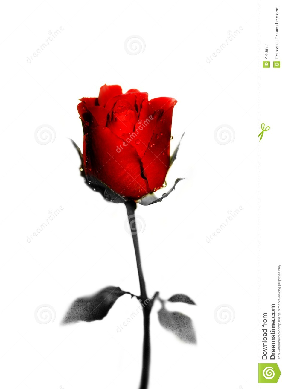 Royalty Free Stock Photography: Red rose. Image: 446837