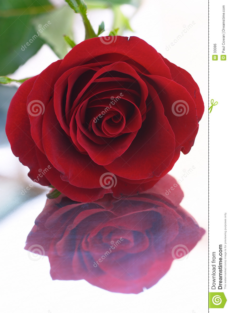 Red rose 8 (reflection)